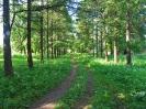 Петровское - Усагинский парк